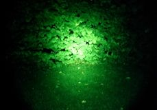 Wildfinder Filterglas Farbe grün für Maxx 5 LED Power Lampe bis